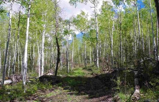 Lot 16 Park Estates Ouray County land for sale