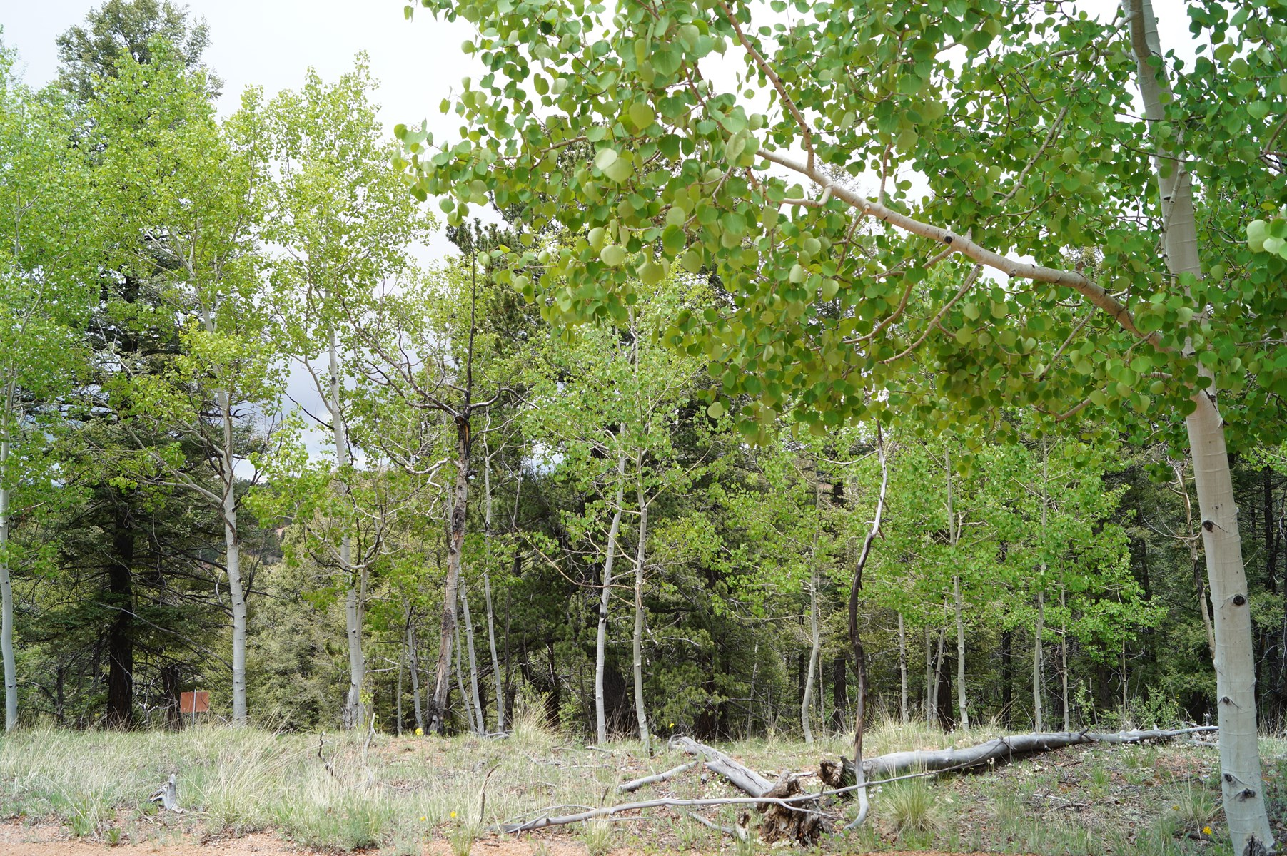 1.57 acres of Vacant Land in Cripple Creek, CO