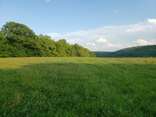 PRODUCTIVE FARM LAND,EXCELLENT  DEER  HUNTING,RECREATIONAL