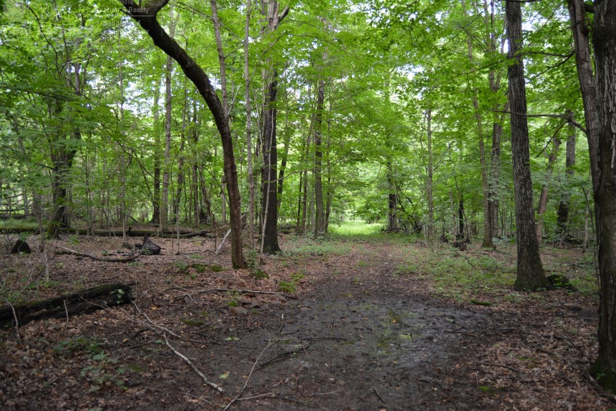 Highly Sought After Wooded Parcel in Sauk County WI
