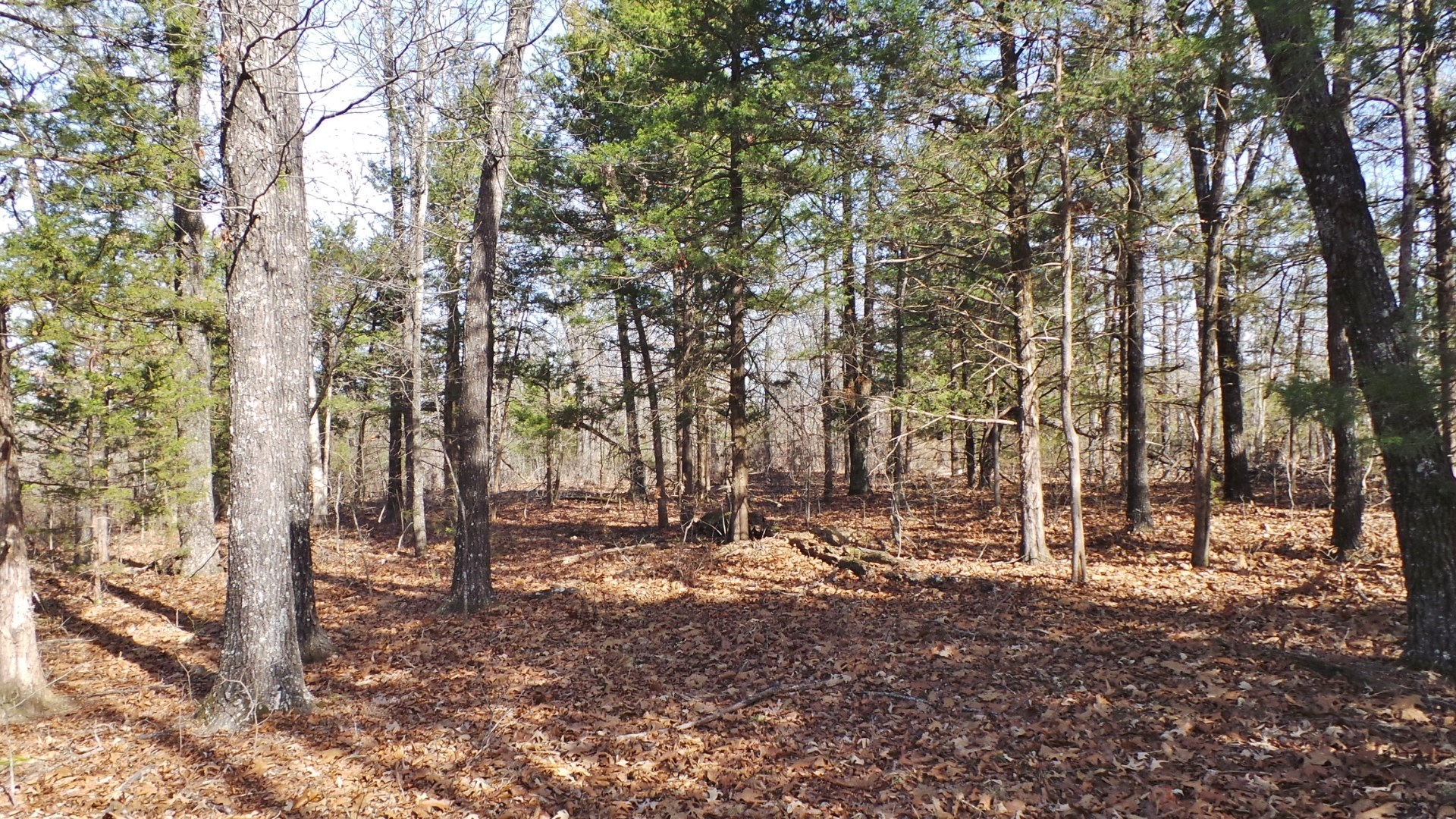 Acreage Lays Good--Close to Yellville & BS Lake