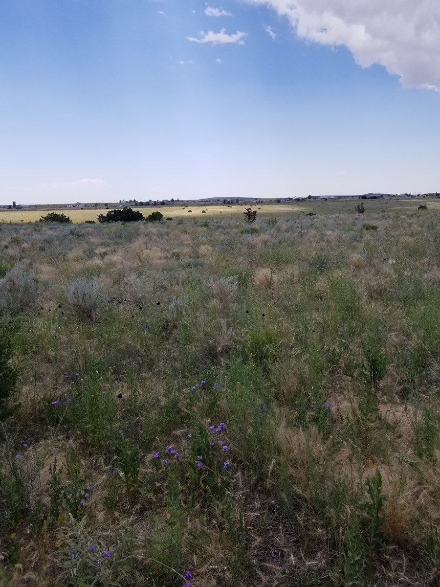 Land For Sale Estancia Valley NM Ranchette Country Lifestyle