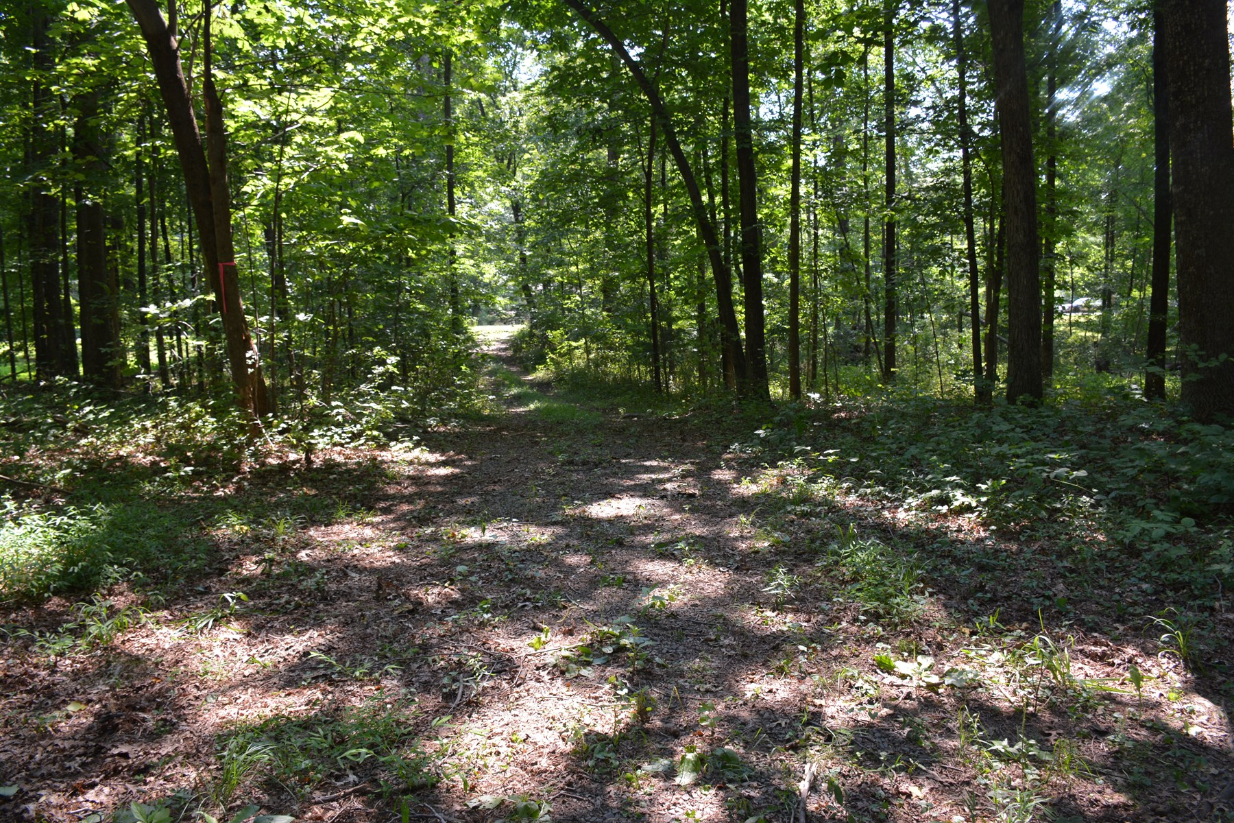 Fauquier Co, VA Wooded Building Lot for sale