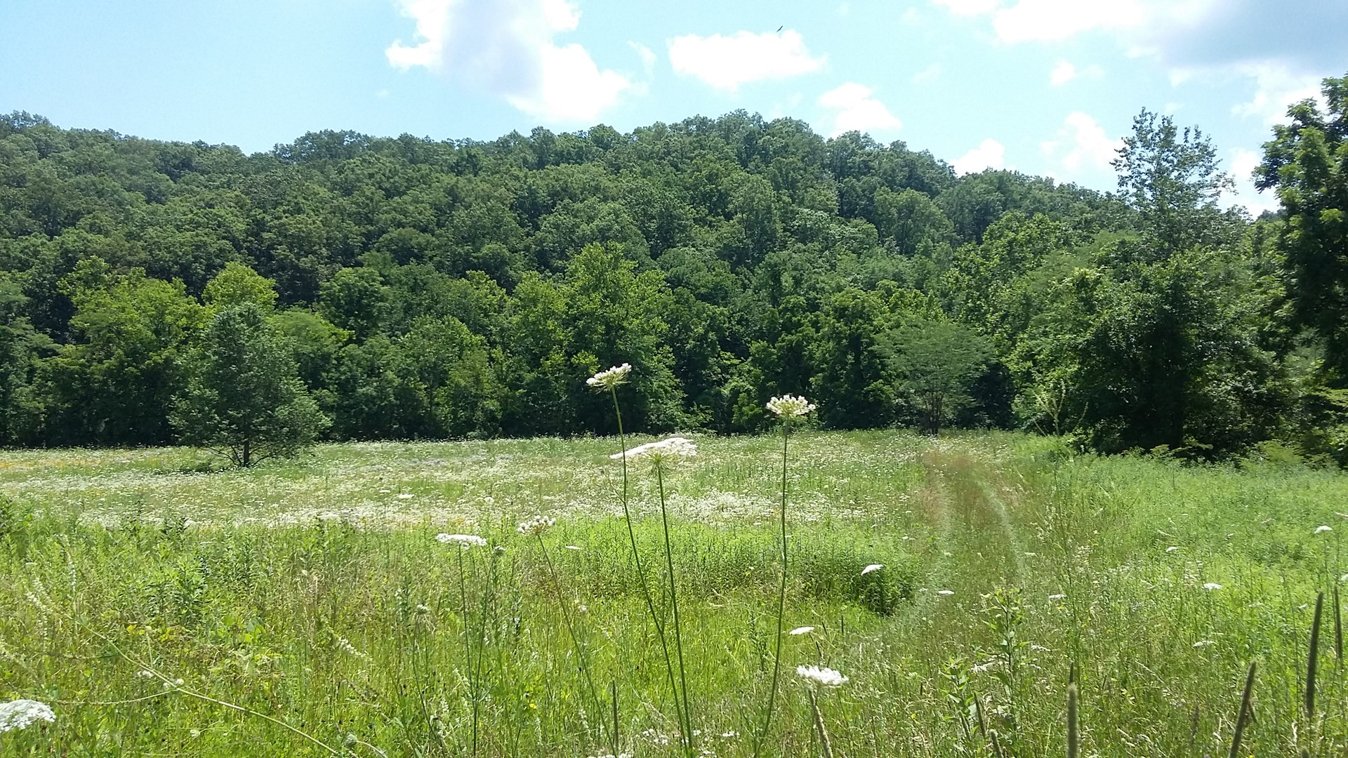 Land-Hunting-Camping-Building Site In Missouri-81 Acres
