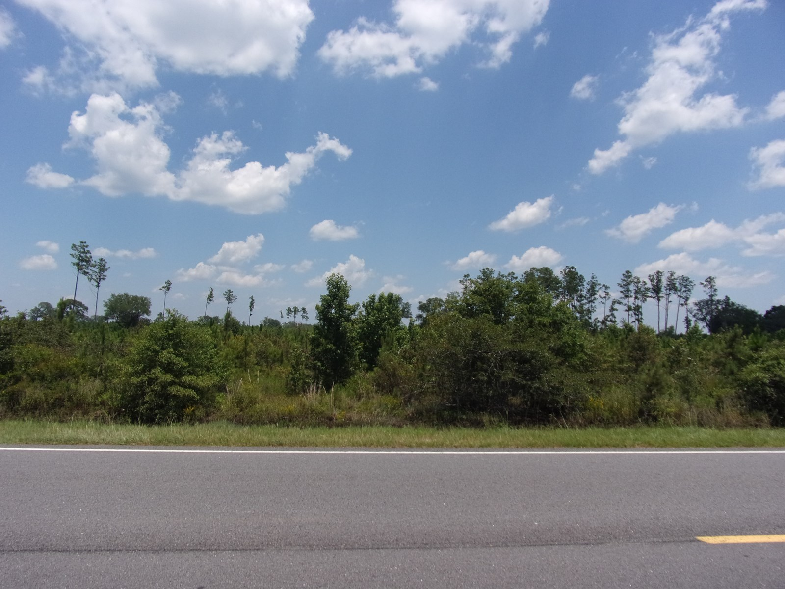 155+/- Acres on Highway 119 with Ogeechee River Frontage