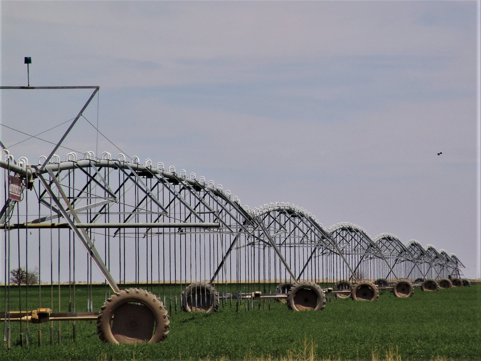 Irrigated Farm for Sale in Southeastern NM, Farm and Ranch