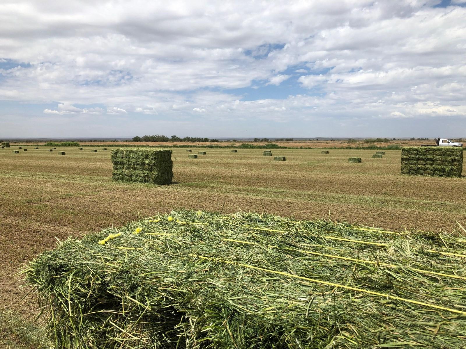 Farm for Sale in Southeastern NM, Artesia