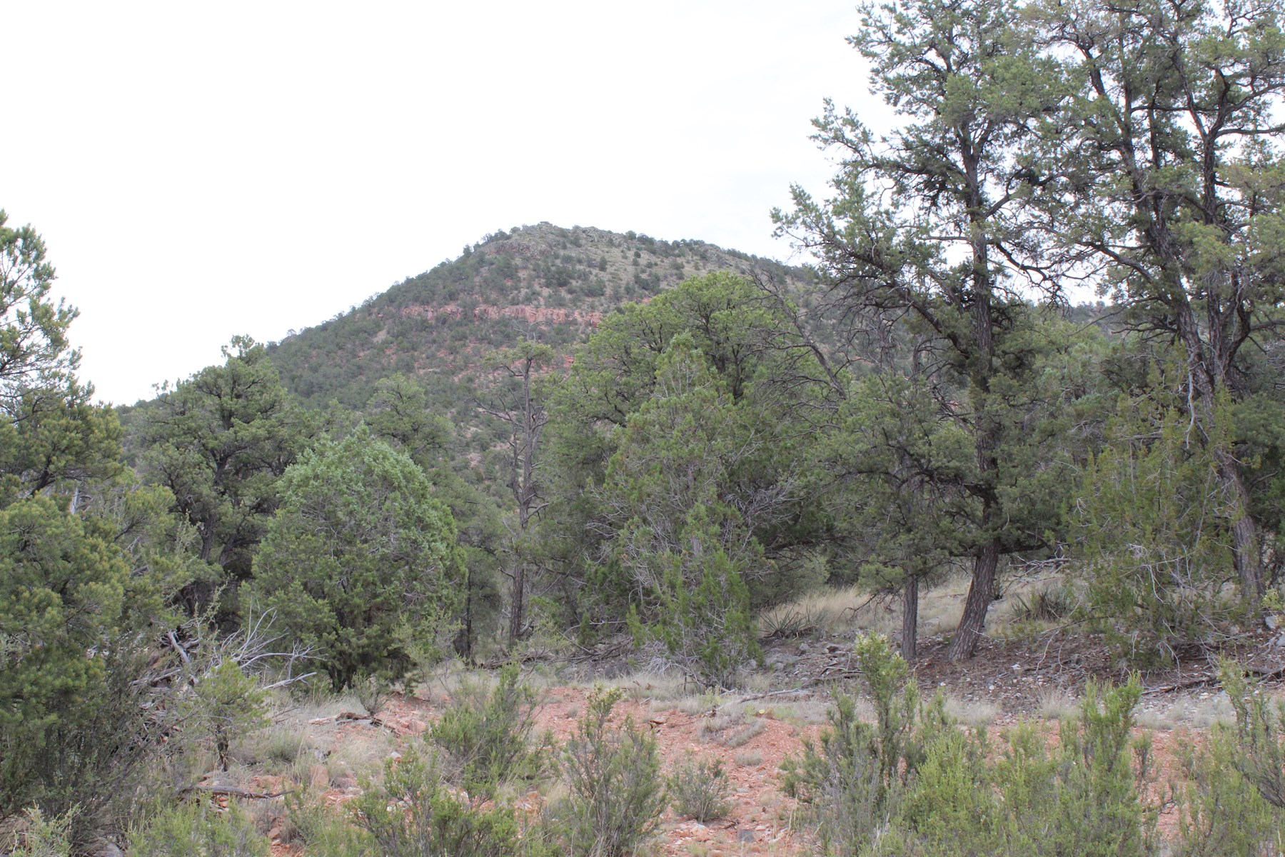 Private and Rural Mountain Land in Arizona Great Price!