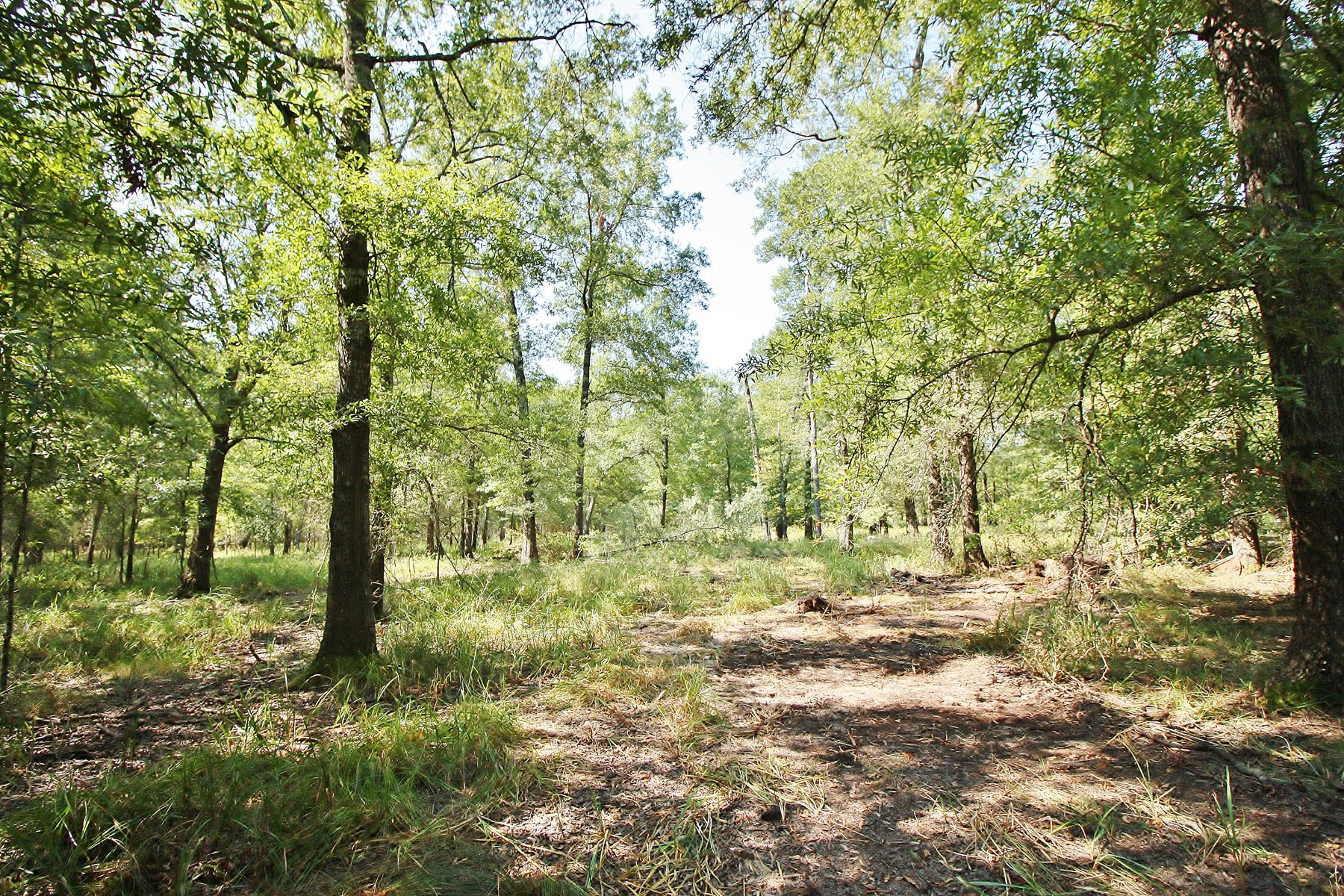 Unrestricted Wooded Acreage for Sale in Centerville, TX