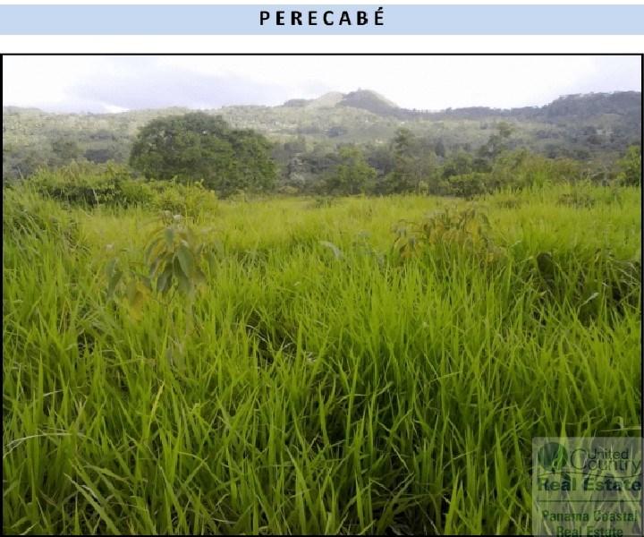 FARM FOR SALE PANAMA NEAR LA PINTADA