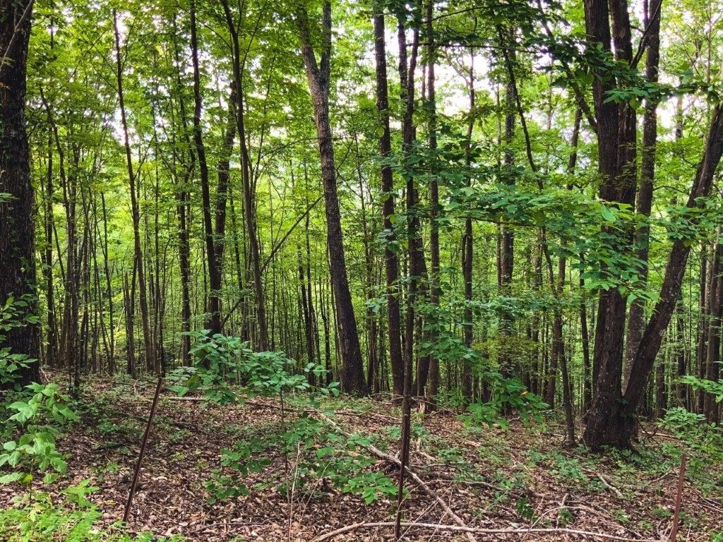 Premier Timber Ridge Lots For Sale At Auction In Ferguson NC