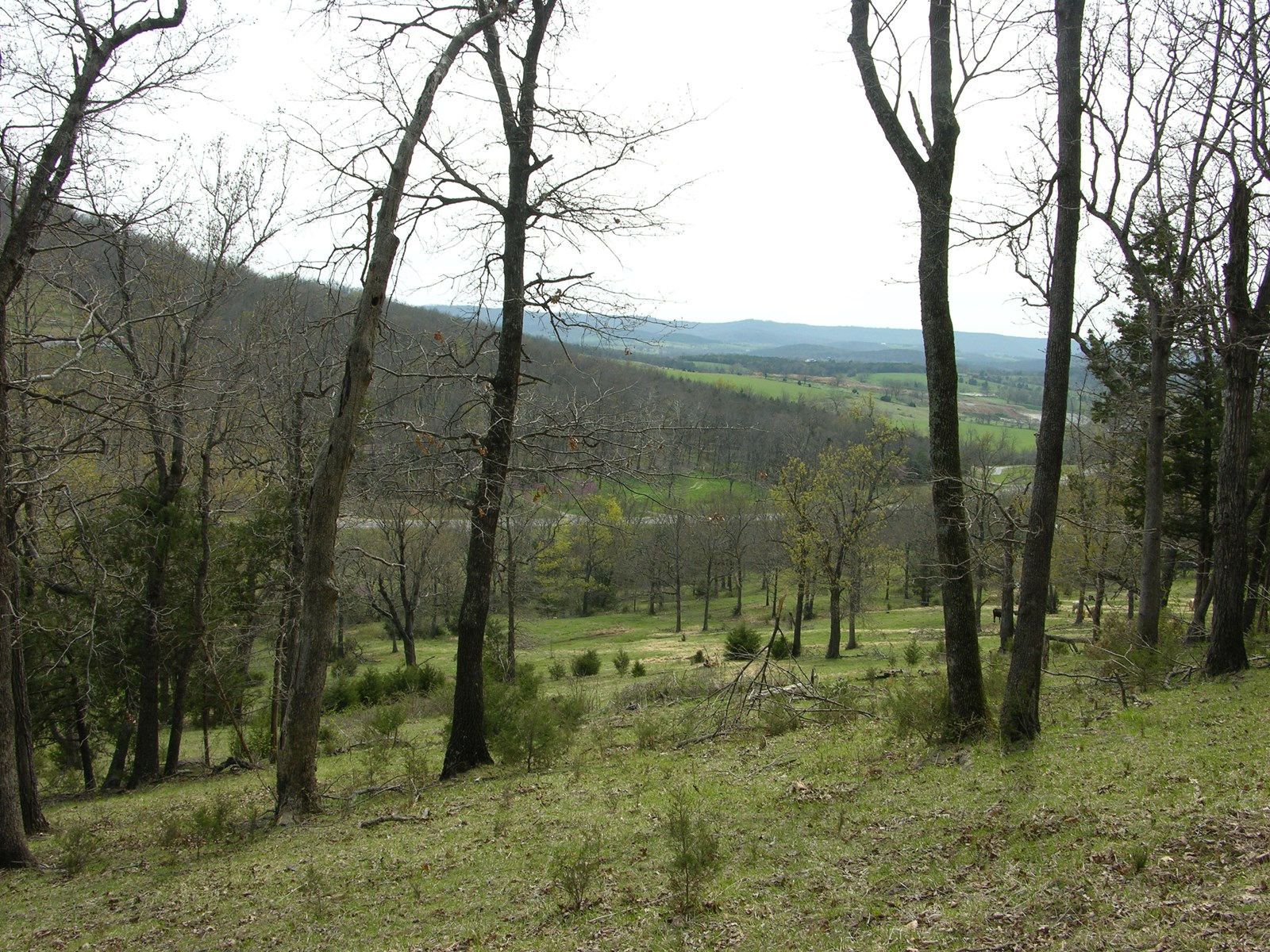 Pasutre & wooded Land for sale w/ Hwy 62 frontage Berryville