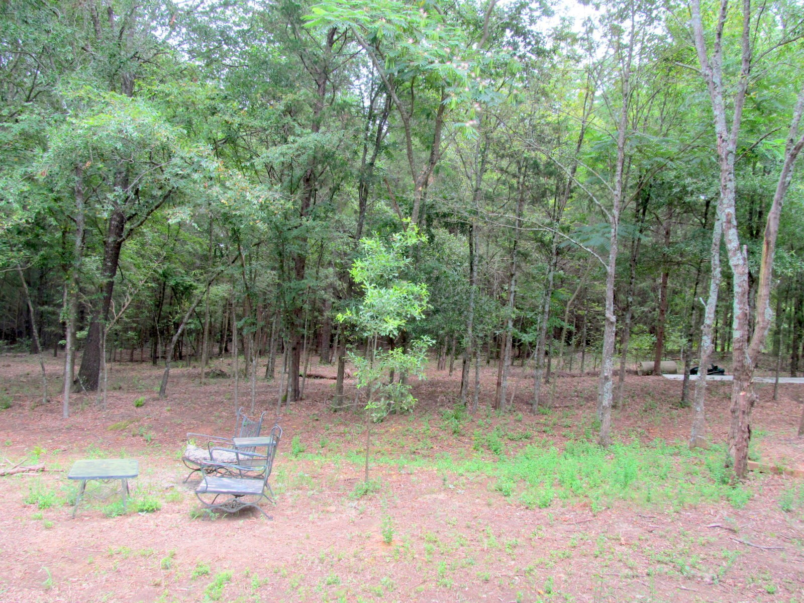 18 + EAST TEXAS ACRES FOR SALE - CAMP COUNTY - PITTSBURG, TX