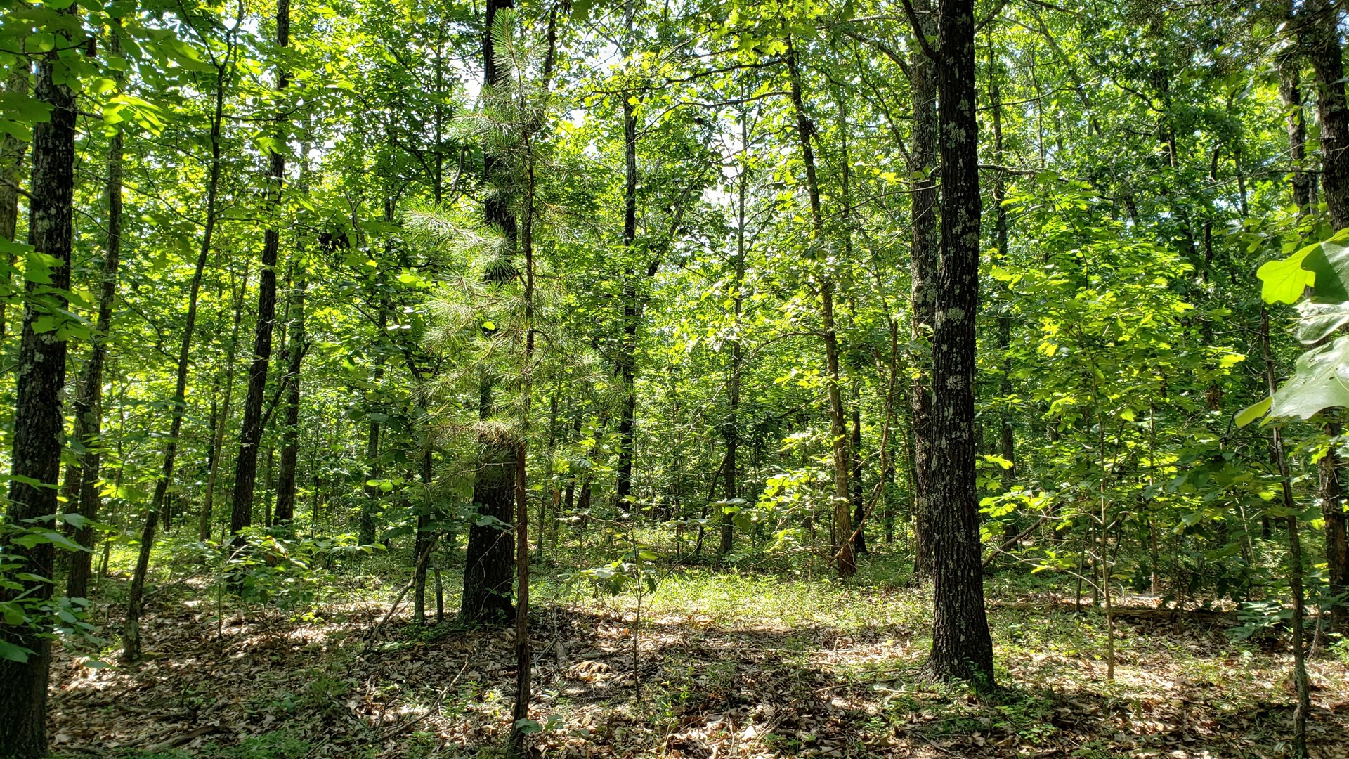 Hunting Land that Joins Missouri Conservation Ground