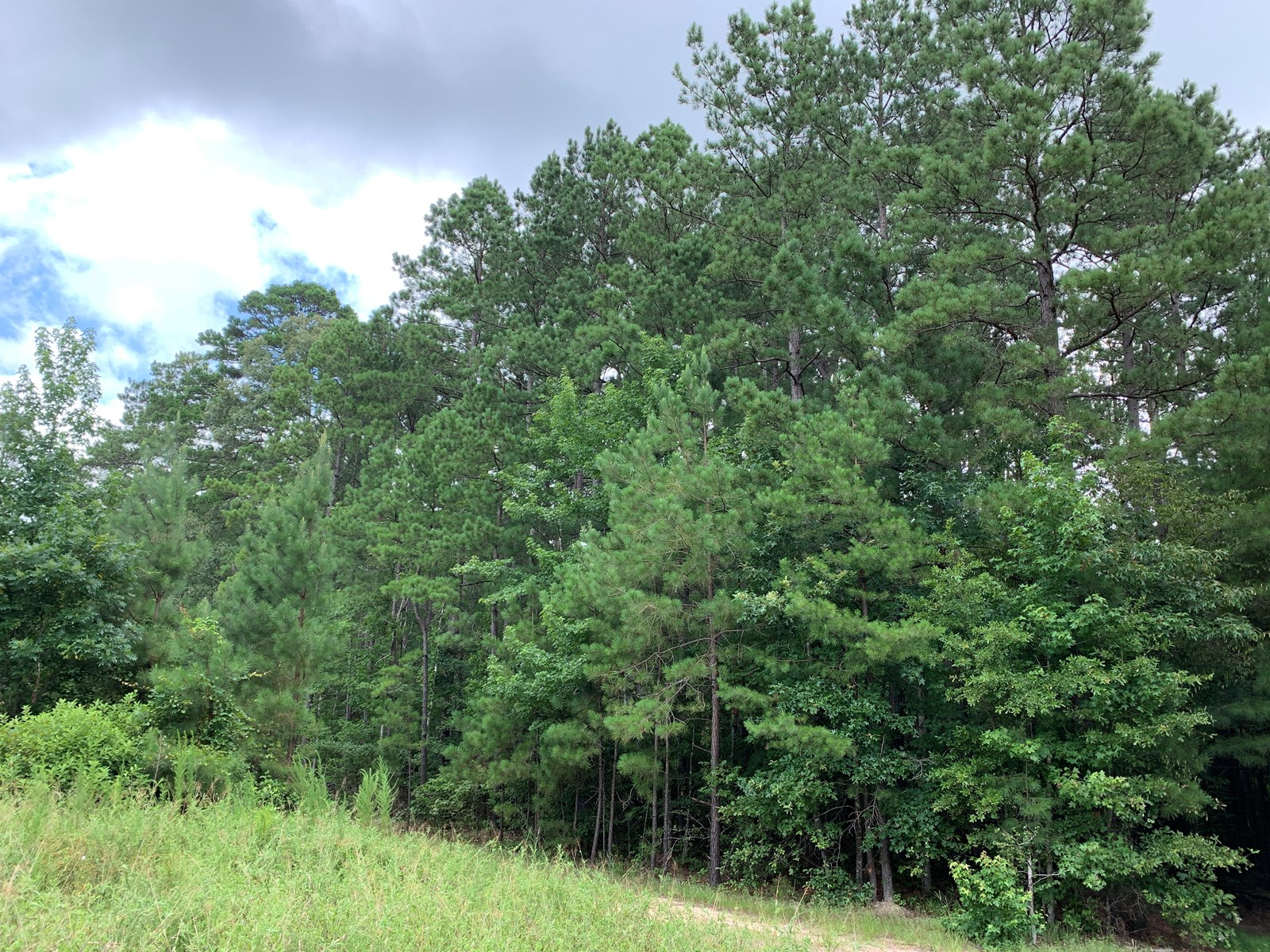 Large Pine Hunting Land for Sale in Union County, Arkansas