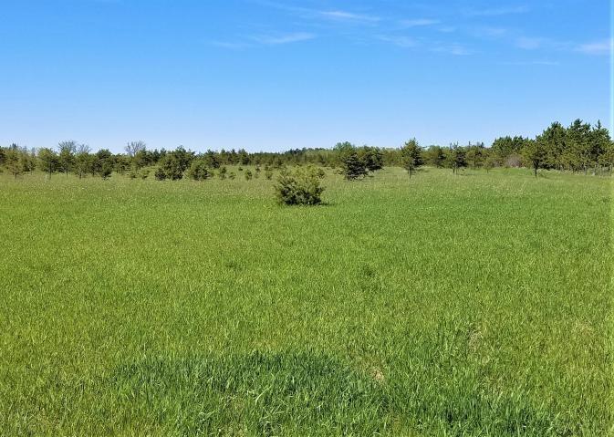 Hunting Property - 70 Acres Hawks Michigan