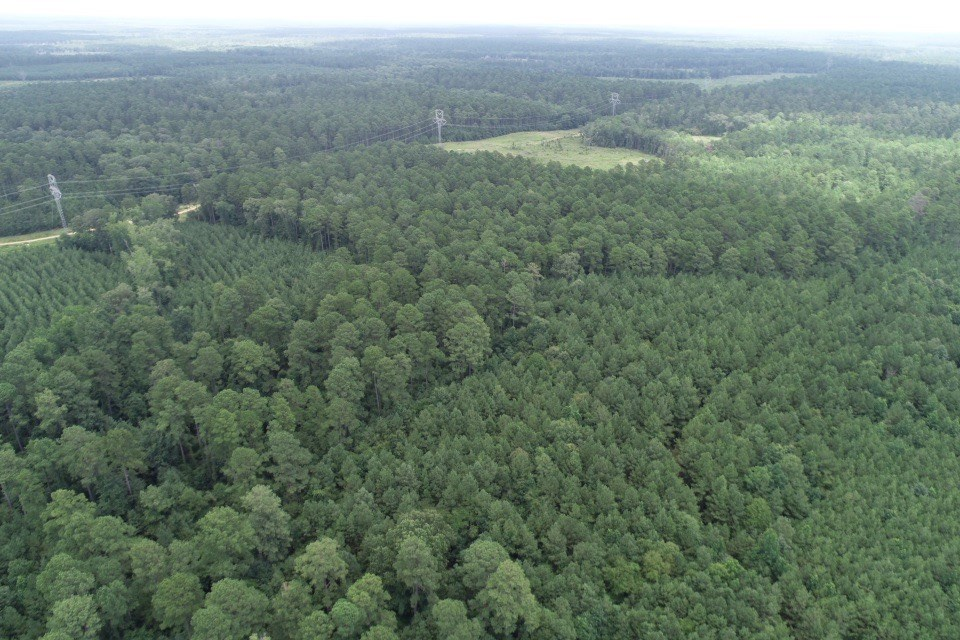 Natural Pine Timber Land for sale in western Union Co., AR