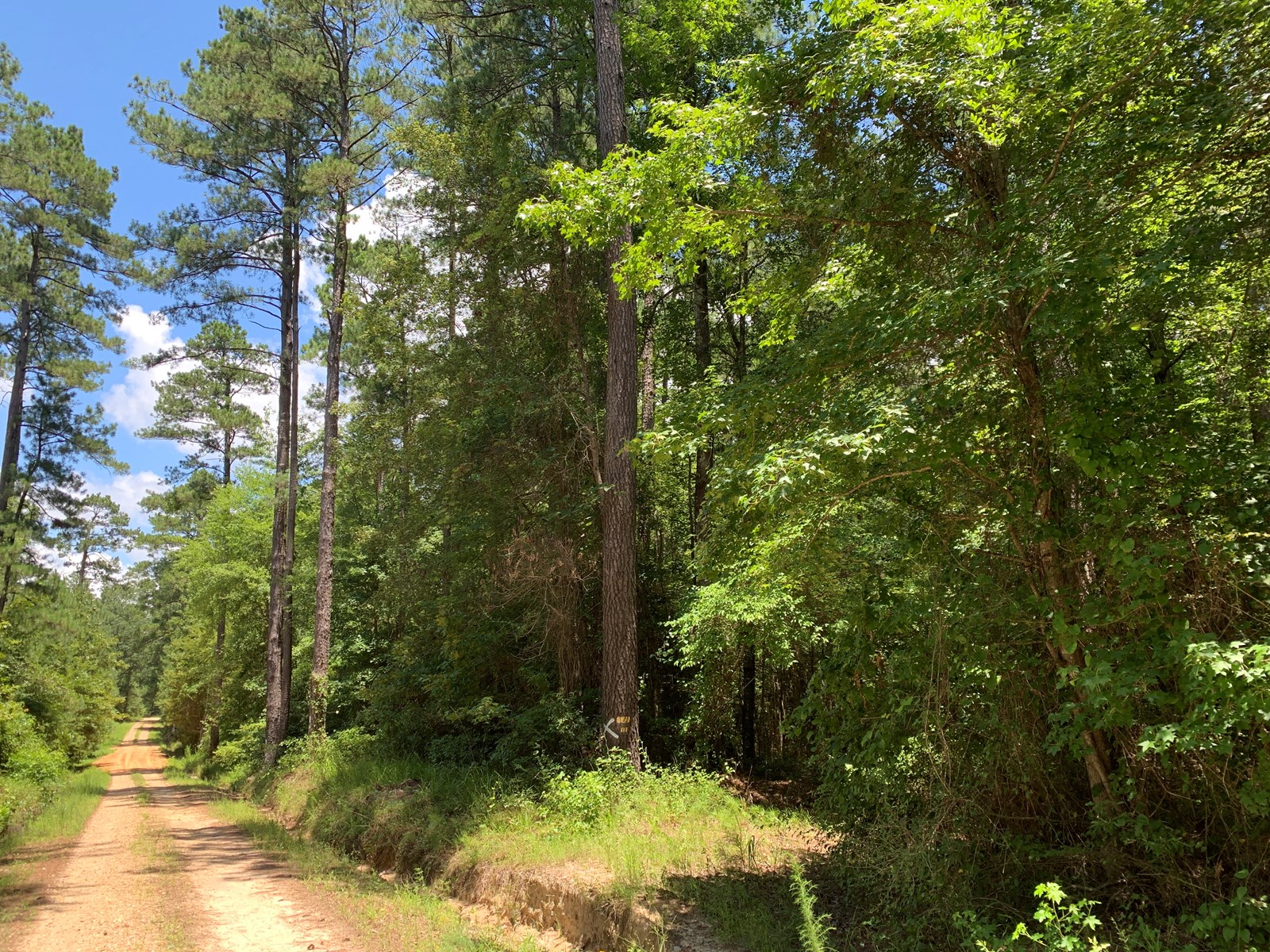 Recreational Pine Timber Land for sale near Mt. Holly, AR