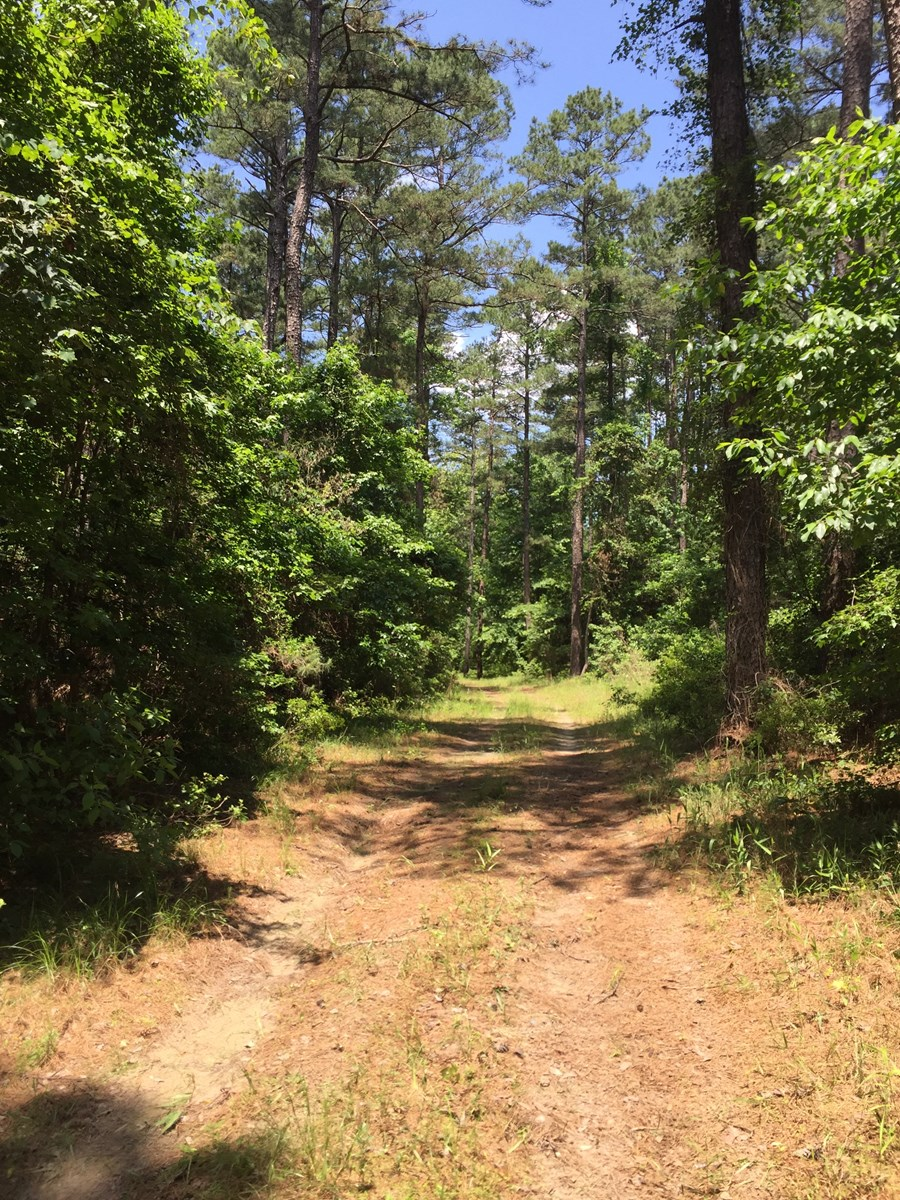 Rural Pine Timber Hunting Land in Columbia Co., AR for Sale