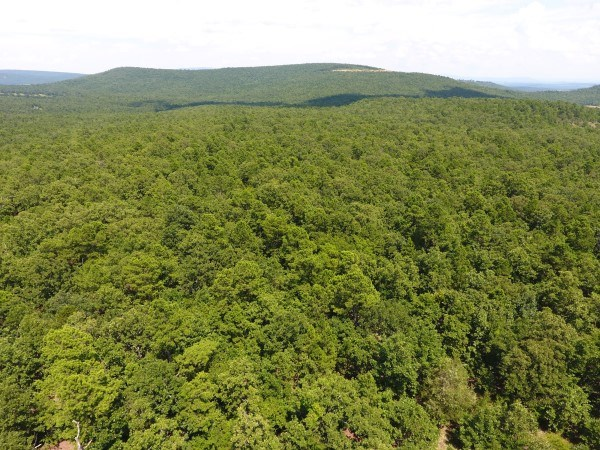 46.7 ACRES – HEAVILY WOODED – HUNTING, CABIN, RECREATION