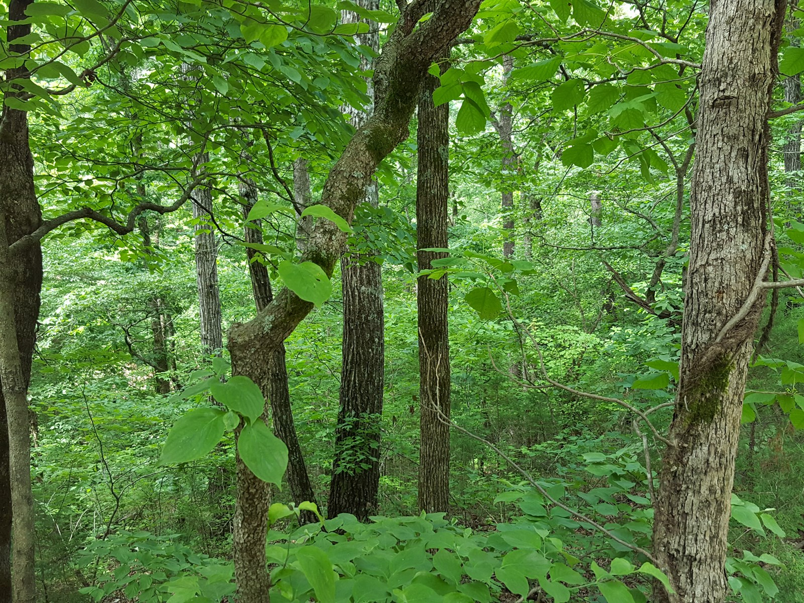 Land for Sale in Texas County, Missouri - Building Lot