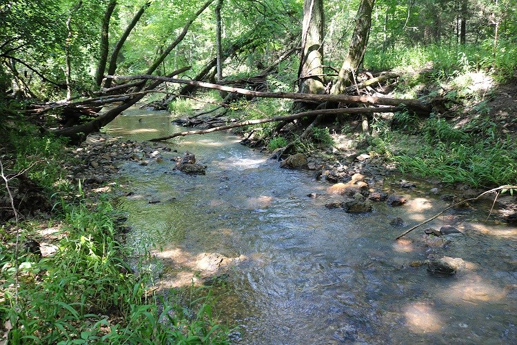 26.5 ACRES FOR SALE JUST OUTSIDE OF CALICO ROCK, AR