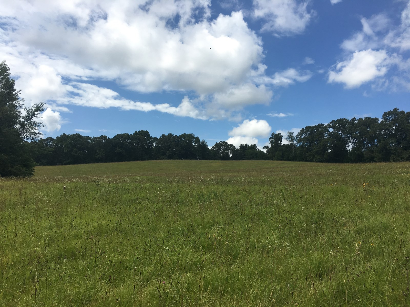 NEARLY 30 ACRES FOR SALE IN TENNESSEE!