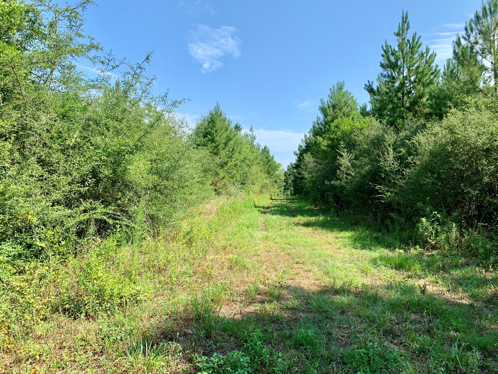 107 Acres Deer Hunting Land - Recreational Tract - Black Al