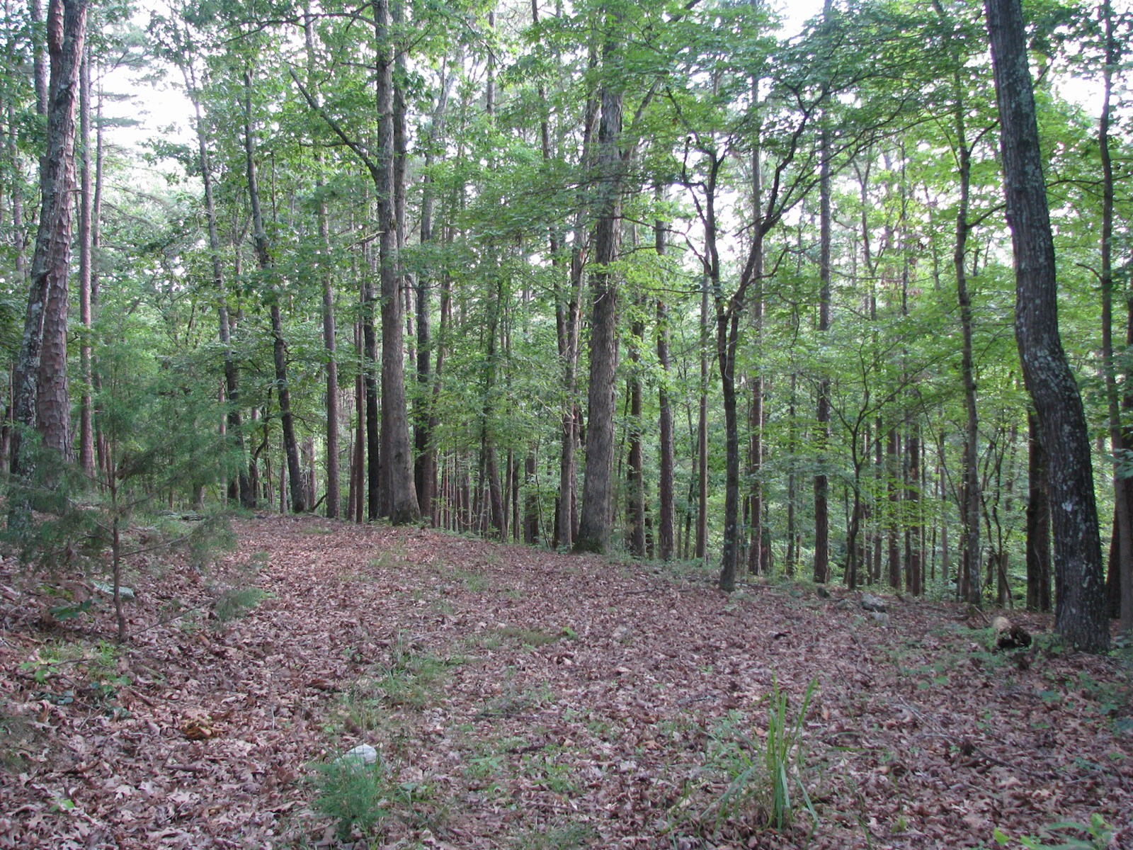 wooded/timber