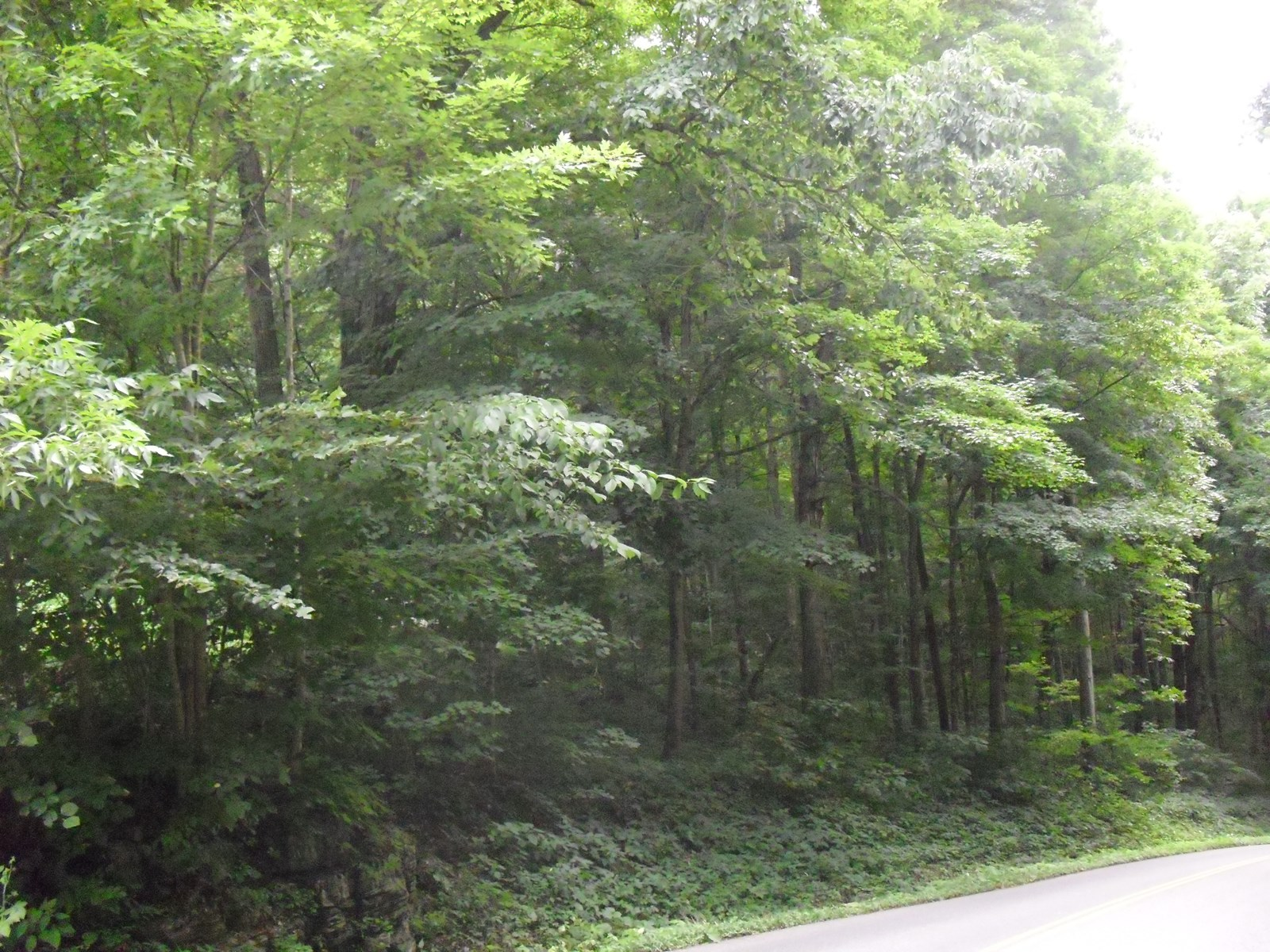 Beautiful Wooded 10.76 Acres!  Chilhowie, VA