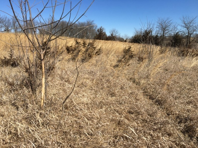 50+/- Acres, Sheridan, MO, CRP Income, Great Hunting
