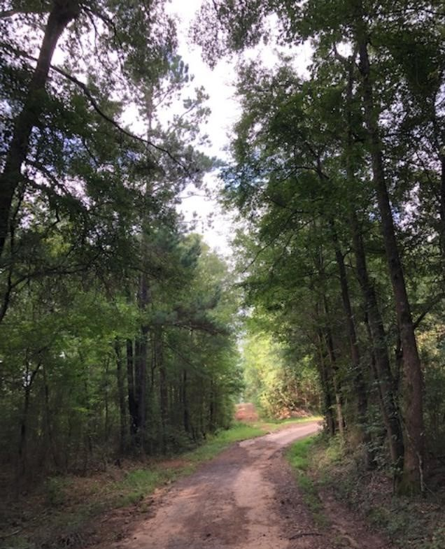 100 ACRES OF MATURE MANAGED TIMBER/HUNTING LAND FOR SALE