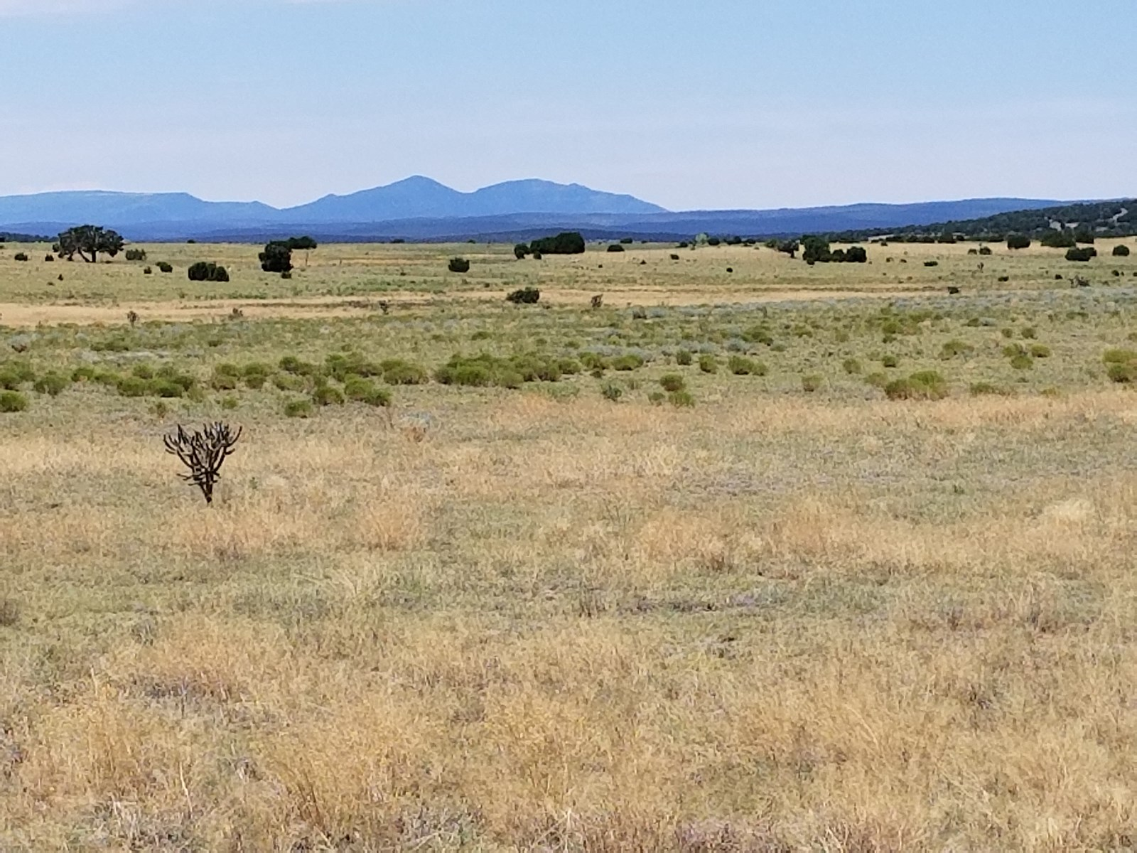 60 Ac For Sale Estancia Valley NM Ranchette Rural Lifestyle