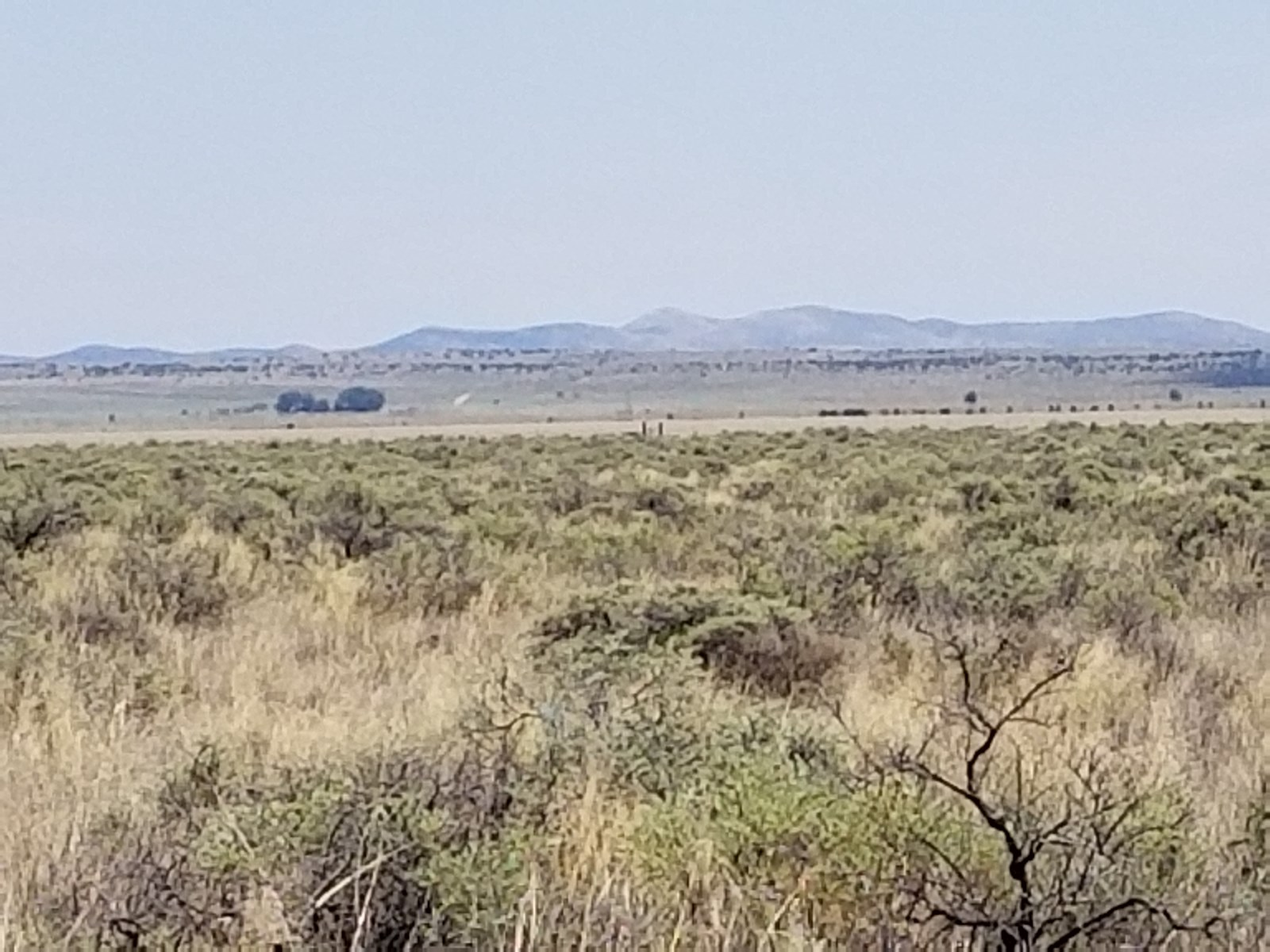 Off the Grid Vacant Land For Sale Estancia NM 40 Ac
