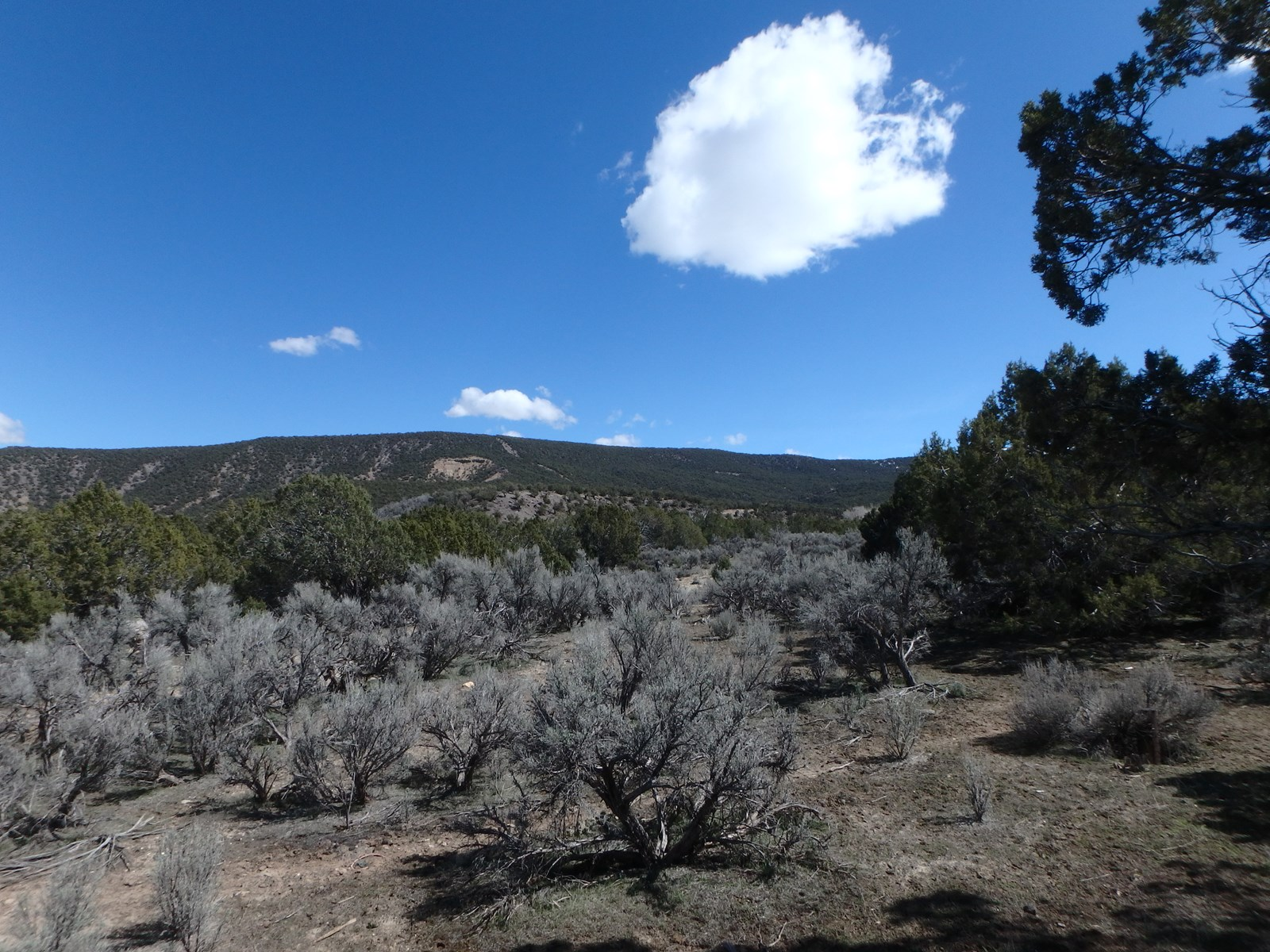 80 Acres of Prime Hunting Ground For Sale in Colorado