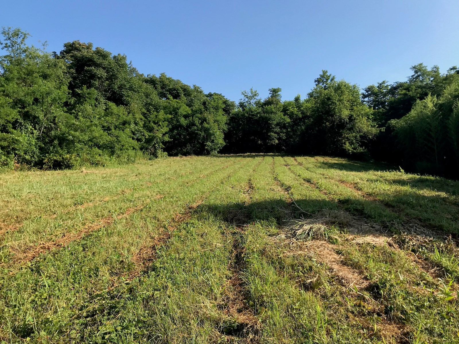 Building Lot for Sale in Floyd VA!