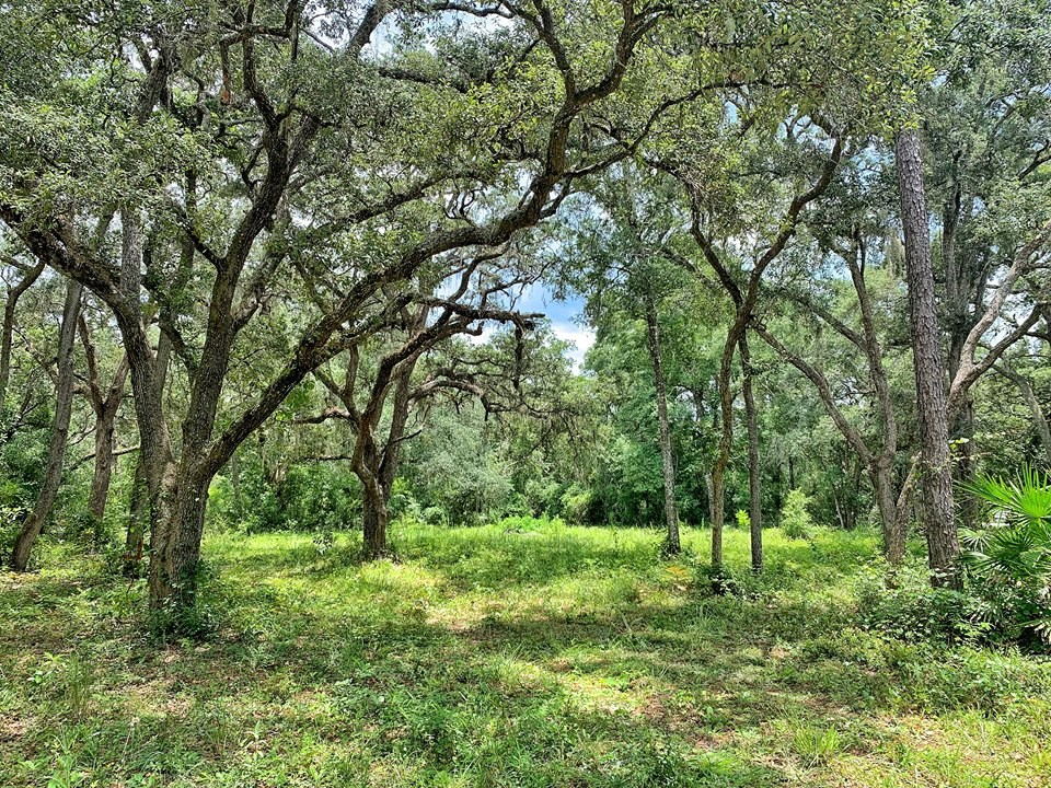 VACANT LAND FOR SALE - 3.52 Acres- Trenton, Levy County, FL