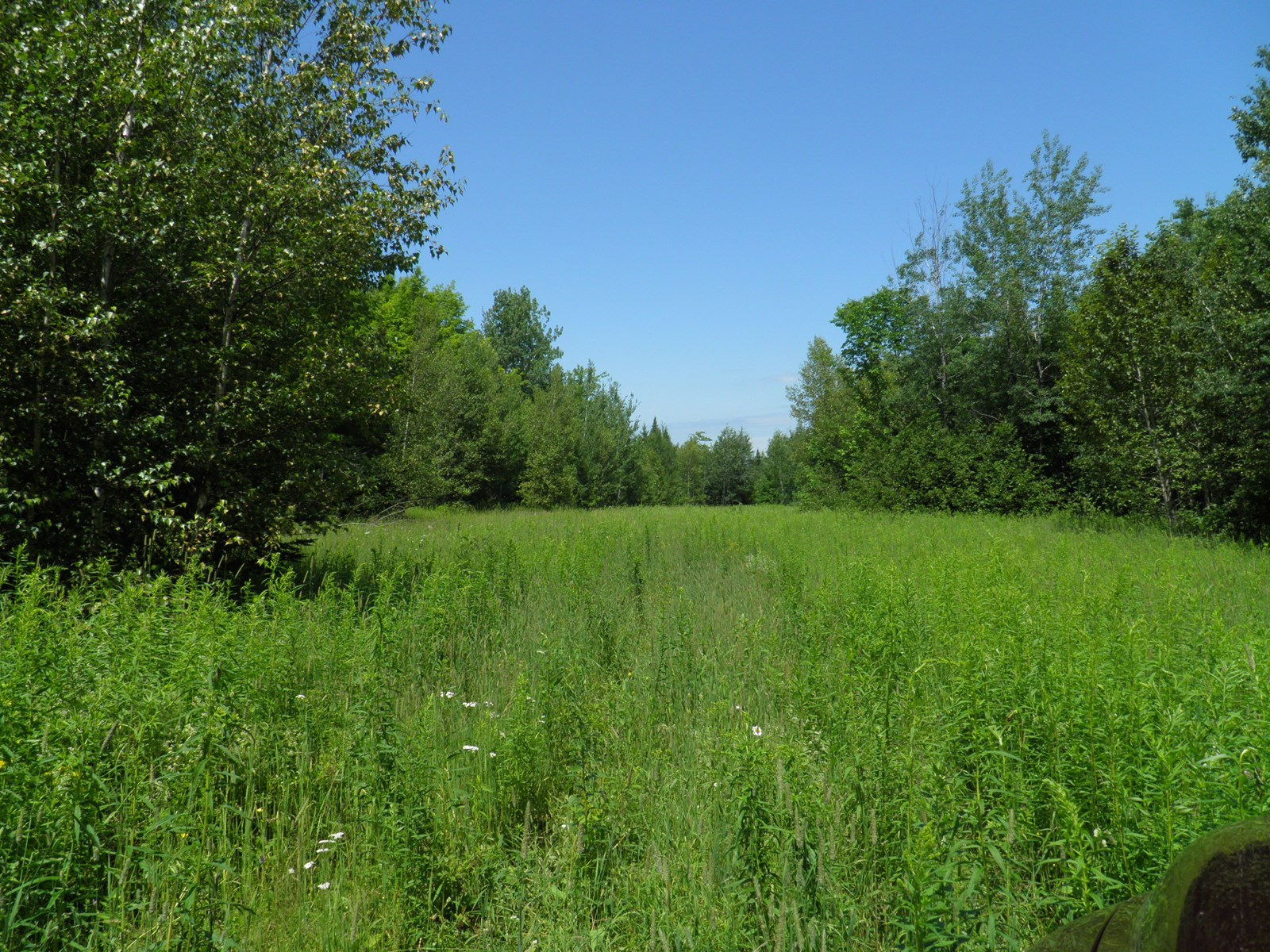 Farmland for sale in Aroostook County, Maine