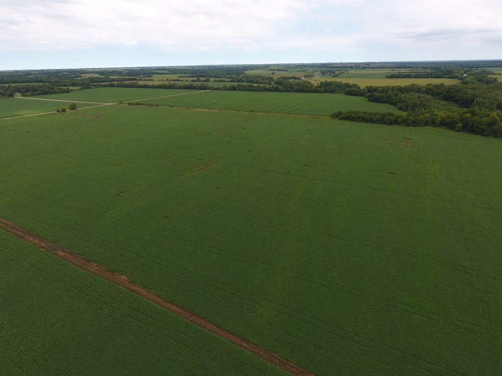 235+/- Acres, Top Quality Bottom Farm, Harrison County, MO