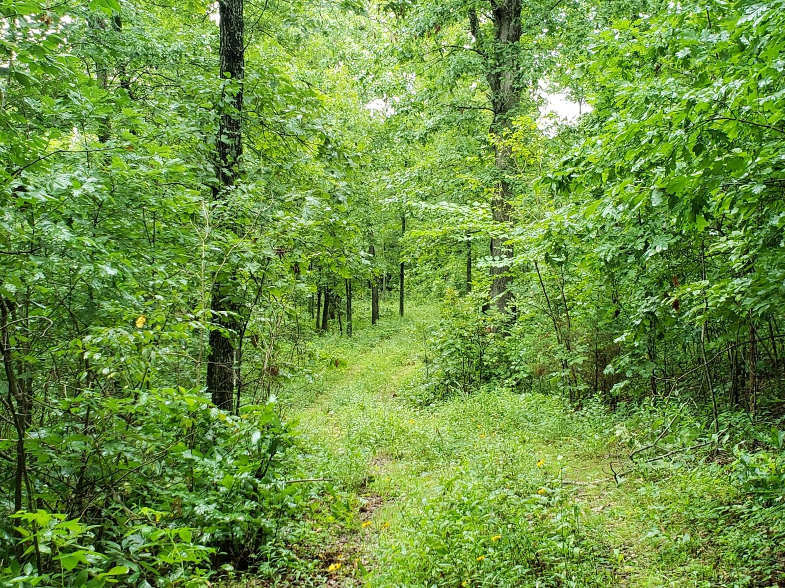 Land for Sale in Southern MO Ozarks