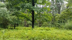 LAND FOR SALE - HAMPSHIRE COUNTY, WV