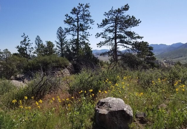 Gorgeous Northern Colorado Mountain Lot