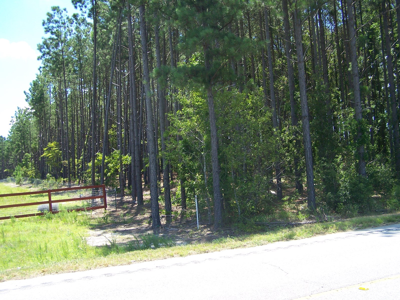 Wooded 5 Acre Parcel Near Historic Camden South Carolina