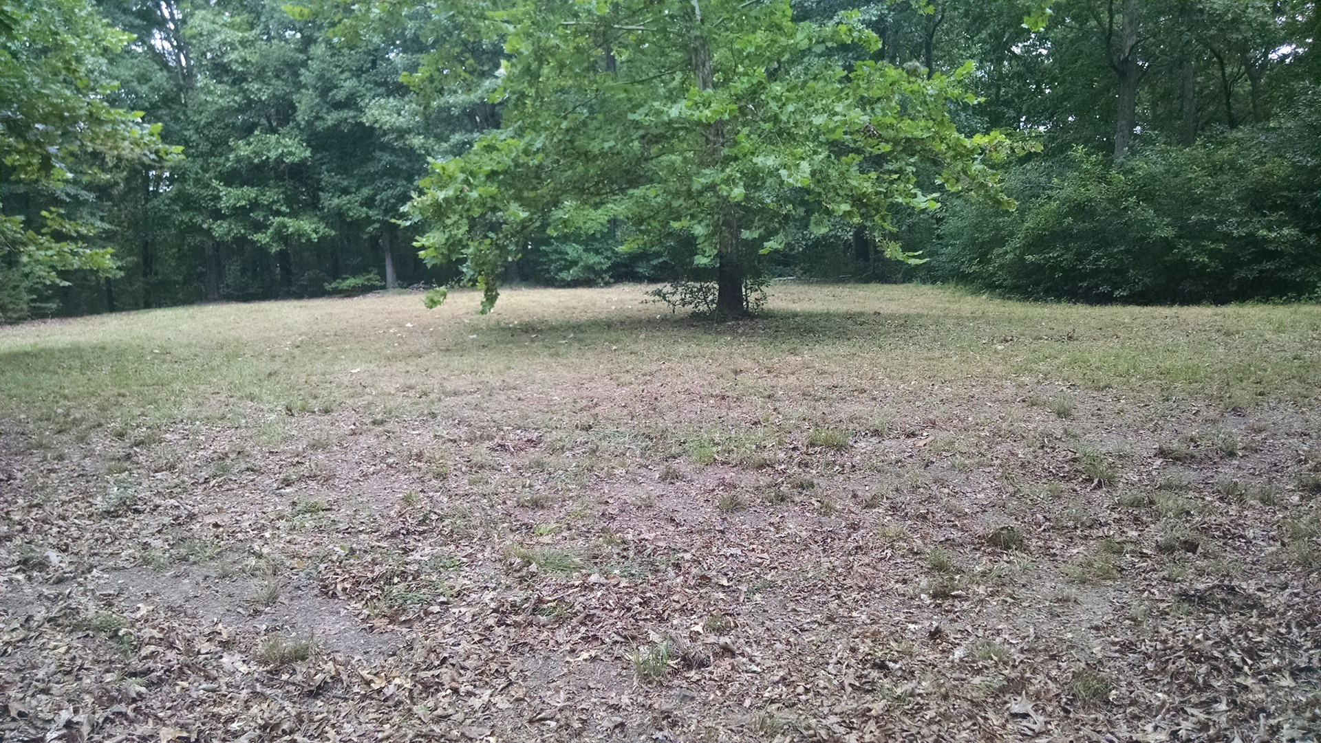 Large wooded acreage in Madison Cnty south of Eureka Springs