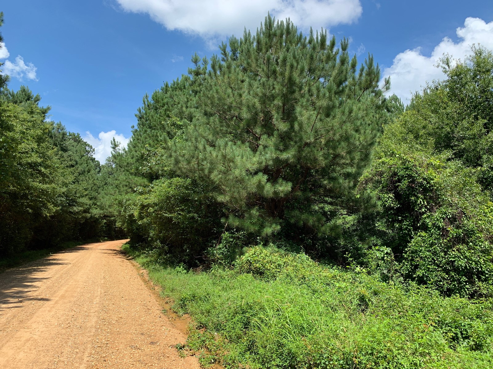 Young Planted Pine Land W/ Creek for Sale in Ouachita County