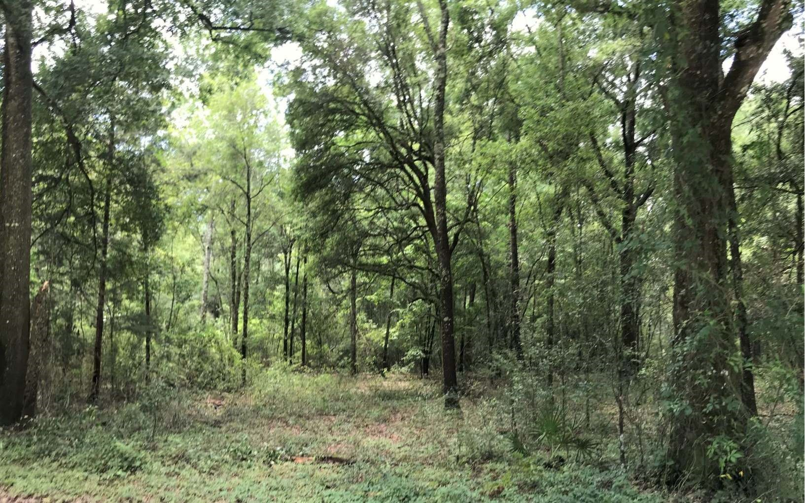 Beautiful and wooded 4 acre lot