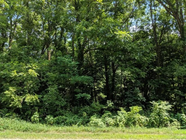 Wooded, buildable 1.65 acres in Delton Schools