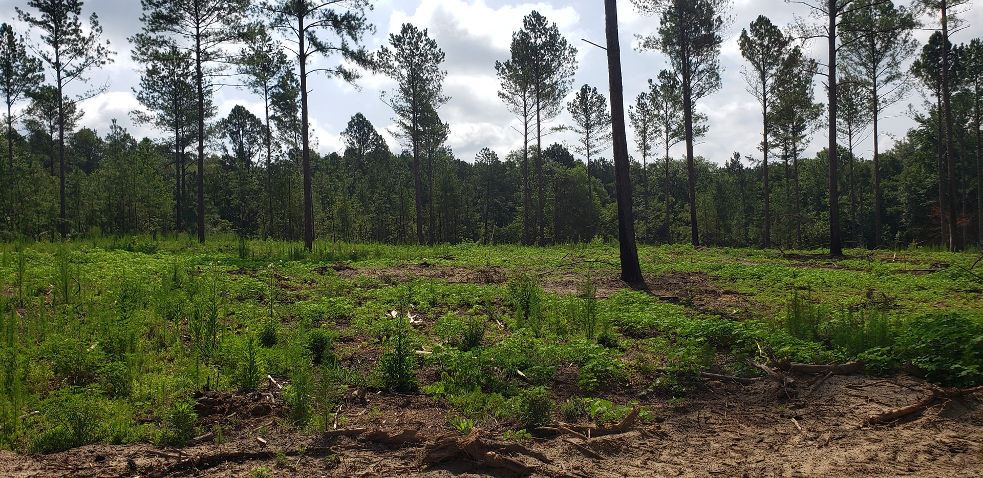 25+/- Acre Estate Size Lot in Swainsboro, GA
