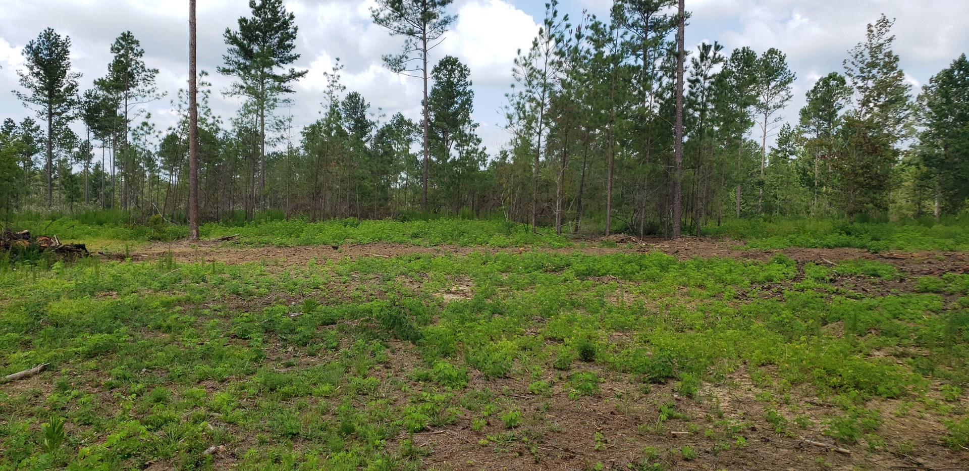 18+/- Acre Estate Size Lot in Swainsboro, GA