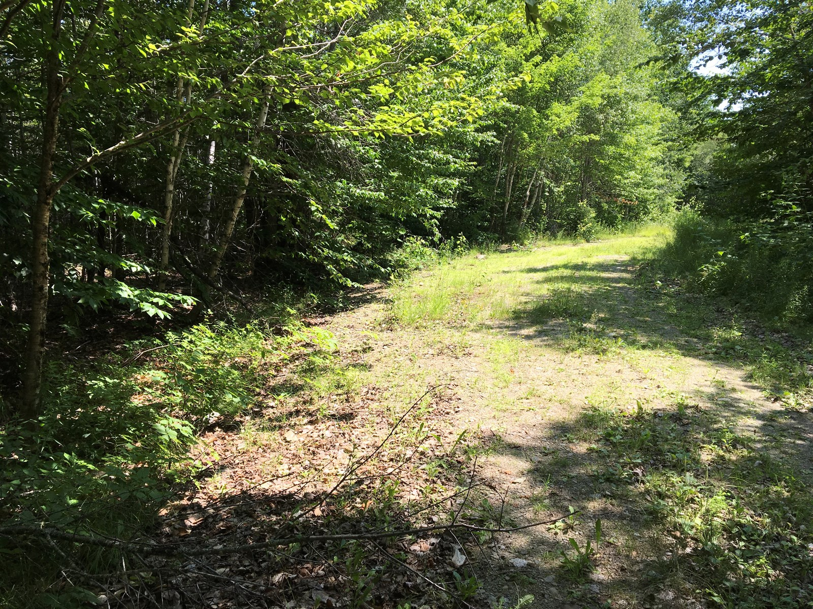Hunting Land for Sale in Prentiss, Maine